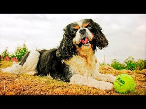 Cute Adorable Dogs Tricks #82