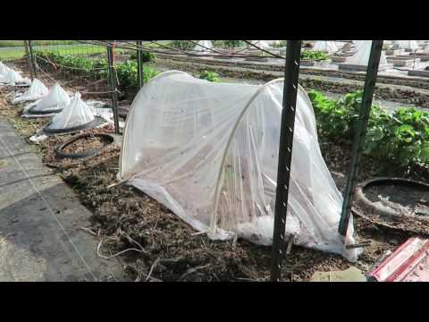 Mark's Caterpillar Cloche System: This Agrarian Life Episode #46