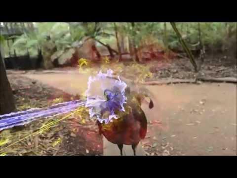 Laser Bird