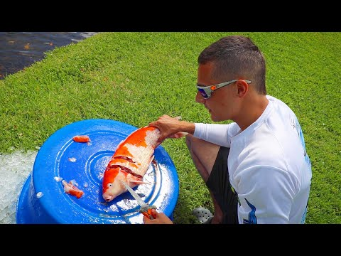 Dead PET Koi Catches Future Pond Monster!! ** Must See**
