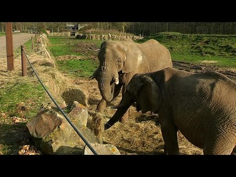 Zoo de thoiry les animaux dans le froid youtube for Parc animaux yvelines
