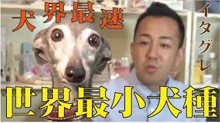 番組提供:ペットライン株式会社 http://www.petline.co.jp/ 犬界で最も...