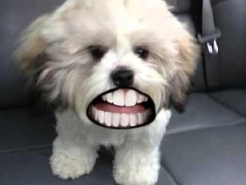 doggie dentures youtube