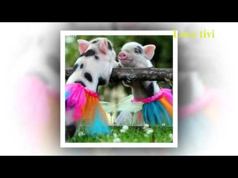 giải mã giấc mơ 2 con lợn tại kqxsmb.info