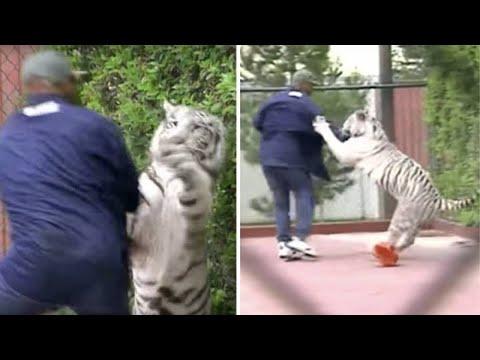 Kết quả hình ảnh cho Mike Tyson and Tiger