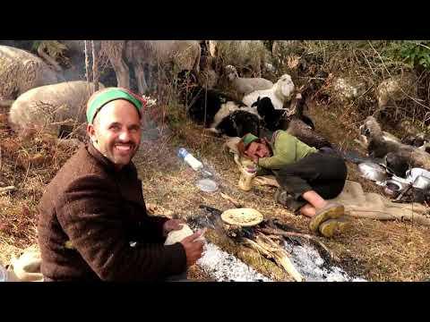Himalayan Shepherds