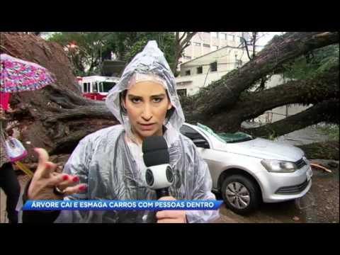 Árvore cai e esmaga carros durante forte temporal em SP