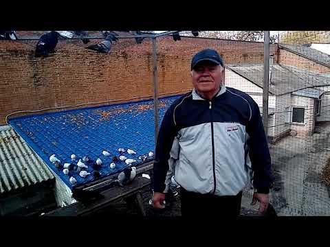 Николай Васильевич Баня и его Николаевские голуби.
