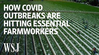 Coronavirus Outbreaks Hit Seasonal Farmworkers in California | WSJ
