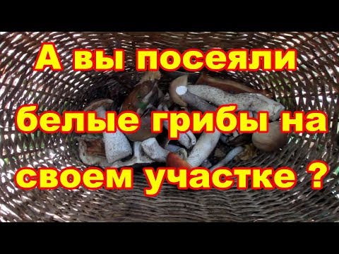 РЖАВЧИНА!!! Как бороться? :: Энциклопедия роз