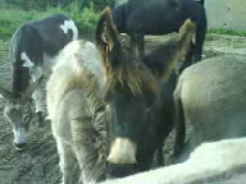 Fickende Pferde