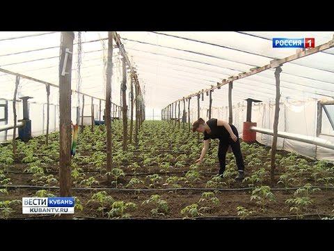 Начинающий фермер как получить грант 2017