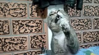 Кот чихает)))