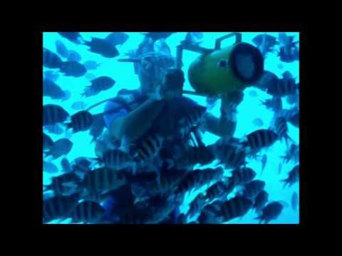 Seascope рыбы Подводное плавание Подводная лодка Египет
