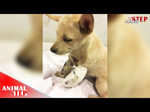 Rescue little stray puppy who got hit by a train over her front leg mp3