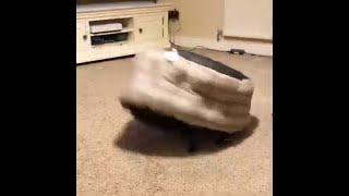 Dog Runs Around The Room Hiding Beneath His Bed