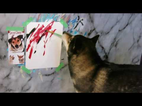 Hunter the Shiba Inu paints for Second Chance Animal Rescue Society (SCARS)