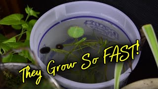 How to plant a LOTUS SEED! - pt. 3