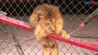 Легендарные братья Шатировы привезли в курский цирк самого доброго в мире льва(, 2015-09-17T15:53:43.000Z)