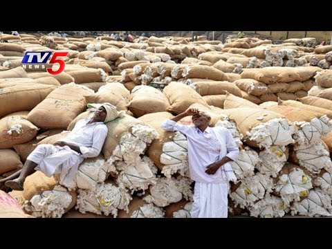 Cotton Farmers Facing Problems Due To Low Price | Annapurna | TV5 News
