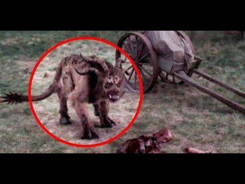 Mystical Creature found in Manipur!!!