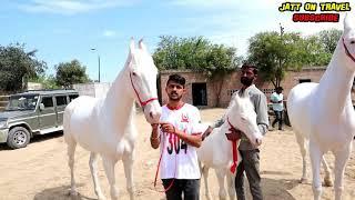 युवराज आया मलिका और करिश्मा के साथ   Nukri  घोड़ियों के Bollywood नाम