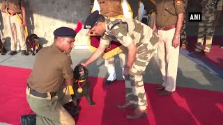 CISF's 7 sniffer dogs of DMRC unit retire