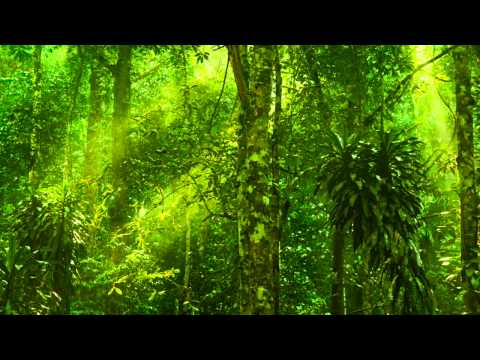 Relaxing Exotic Forest Ambience - Birds Chirping, No Music (1 Hour)