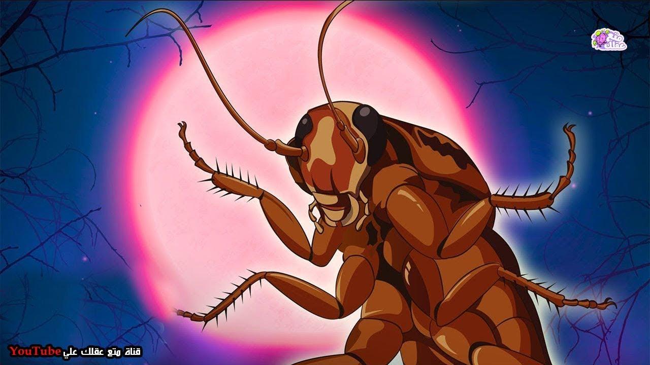 العلماء يفسرون لماذا لايمكننا  التخلص من الصراصير ؟ - اقوى كائن على الارض
