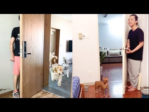 Dog Reaction to Hide And Seek – Funny Dog Hide And Seek Compilation