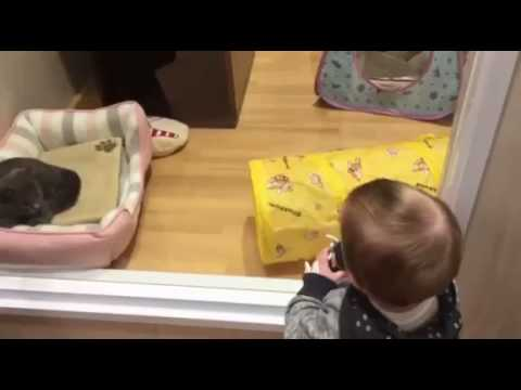 Too Much Cuteness - Baby, Kittens, and Puppies