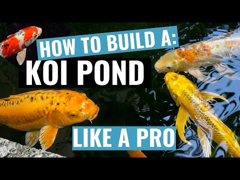 How To Build A Koi Fish Pond- DVD Video Training