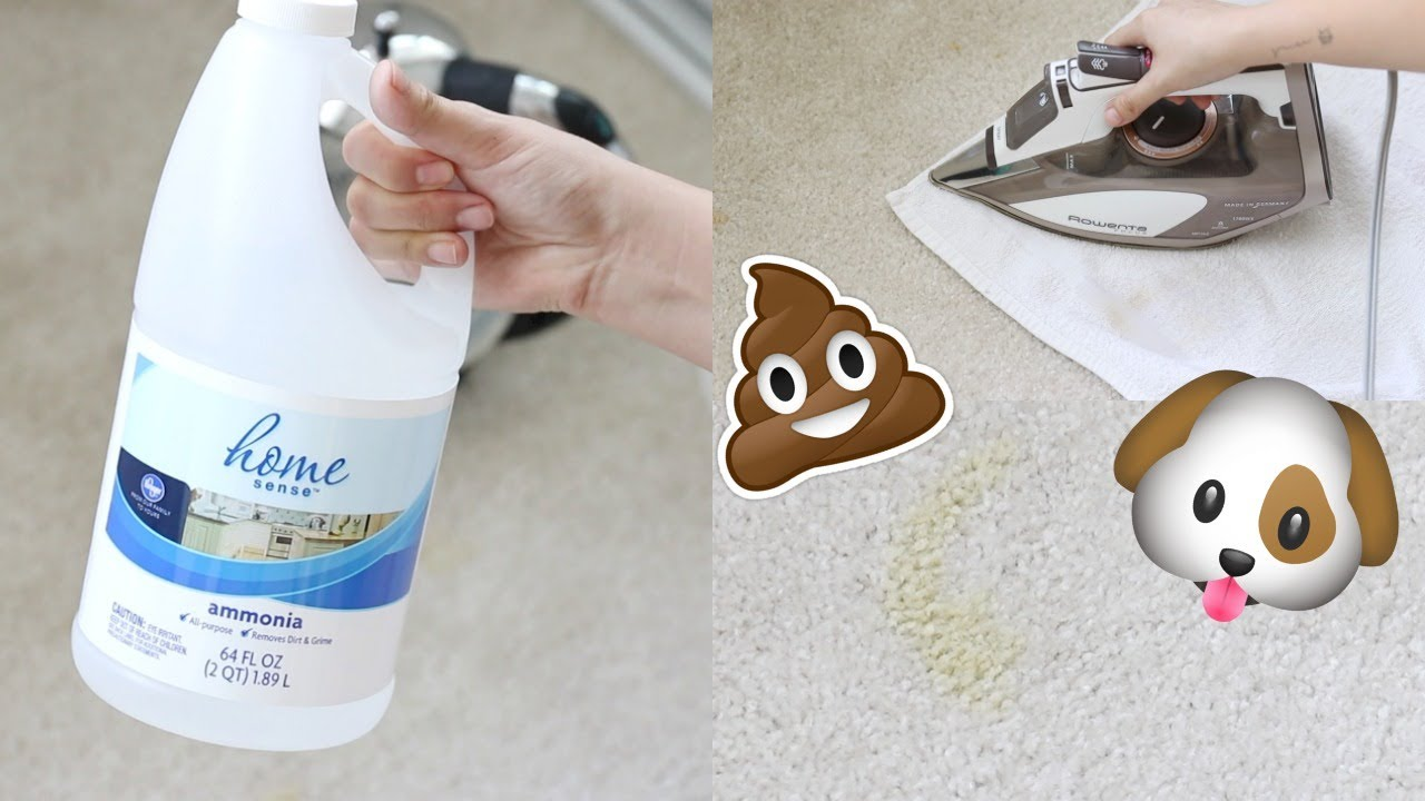 How To Remove Carpet Stains Pet You