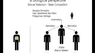 FP006 Patriarchy A Biological Perspective Thumbnail