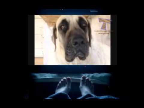 Amazing dog tricks   Funny and awesome dog compilation