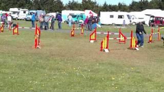 Grade 1 Jumping Kernow K9 Show Easter