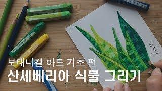 크레파스 일러스트, 간단한 식물 인테리어 그림그리기 보태니컬아트 기초 초보 Crayon drawing