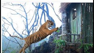 natural mixed foods nice villa bamboo house and a tiger tsov hnia ntxhiab
