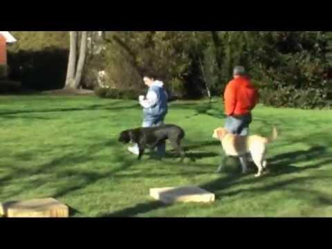 Group Class. Best Friends Dog Training www.MuttManners.com
