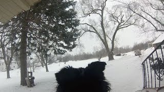 GoPro Border Collie in the snow