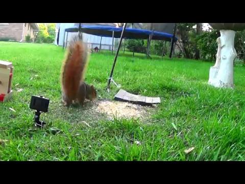 Nerf Gun Shooting a Squirrel at Close Range