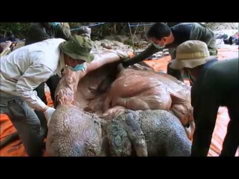 Javan Rhino Conservation Programe