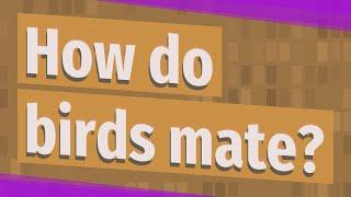 How do birds mate?