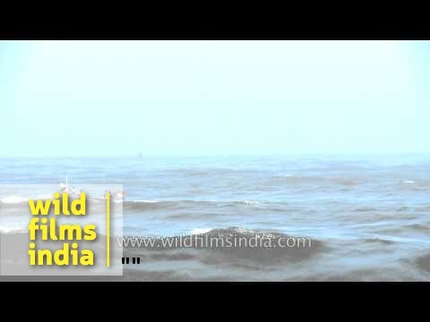 Fishing boat through the waves of Arabian sea
