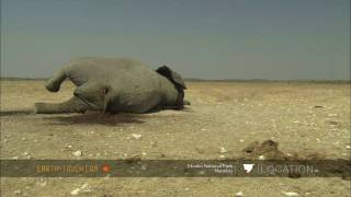 Dead elephant attracts scavengers