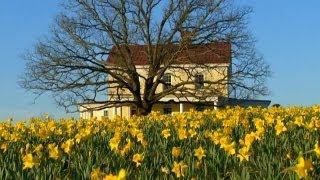 How to Plant Daffodils | P. Allen Smith Classics