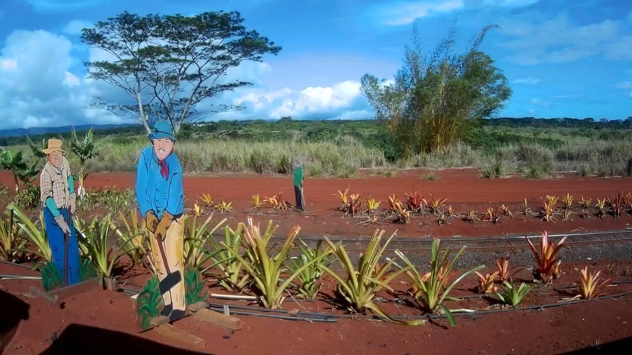 Pineapple Express Train Tour - Dole Plantation - YouTube