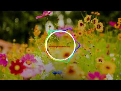Download Koi Vi Nahi Ringtone | Shirley Setia, Gurnazar | Best Ringtones Download Free For Mobile