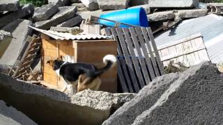Basic Usar Search - Banjo The Search Dog