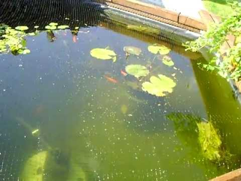 Wooden fish pond house of fishery lovers for 90 gallon pond liner